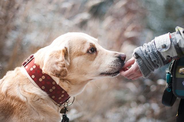 přátelství se psem