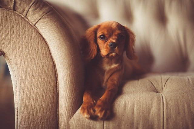 rozkošný pes na gauči