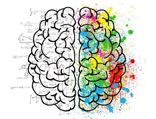 dvě hemisféry mozku